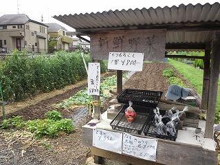 2012.7.14 トウモロコシ 006.jpg