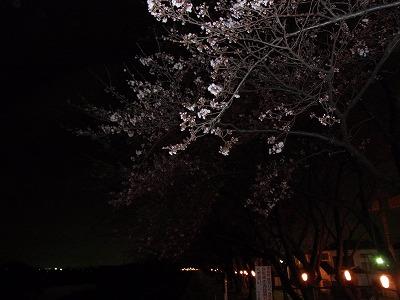 2010.3.31 009.jpg