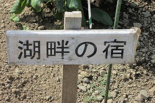 園2012.9.5 ダリア 078.jpg