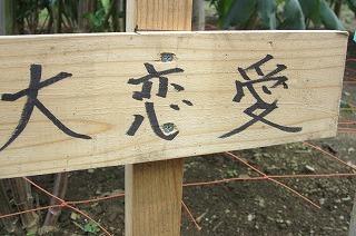 園2012.9.5 ダリア 094.jpg